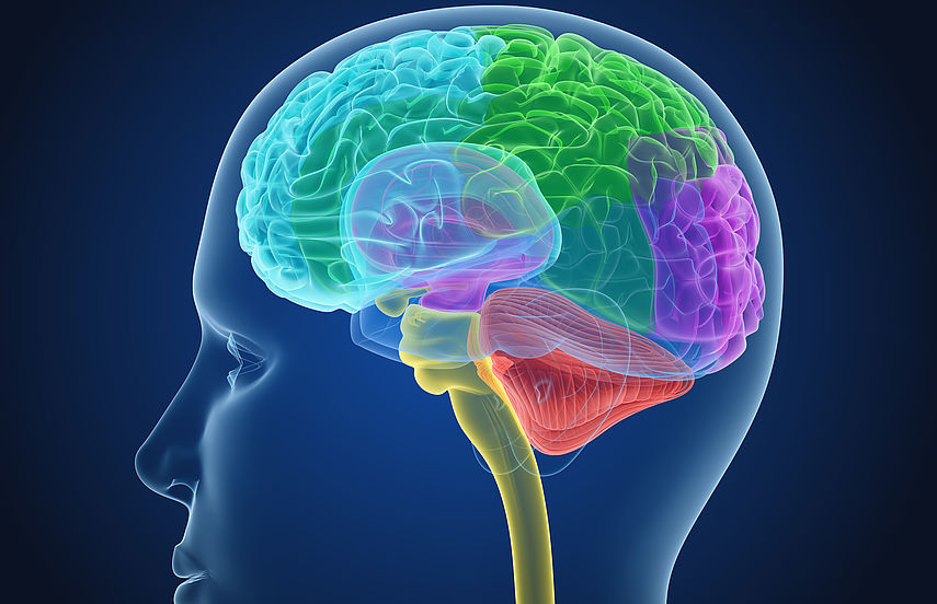 Desenho esquemático do cérebro humano para ilustrar o combate à depressão.